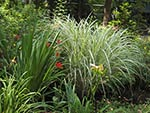 mixed perennials and grasses