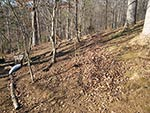dry wooded hillside before planting